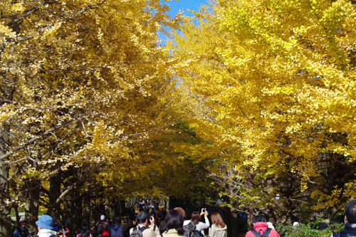 昭和記念公園201011-5