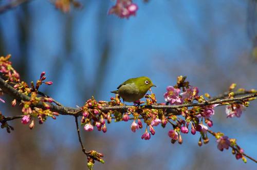 散歩道の野鳥
