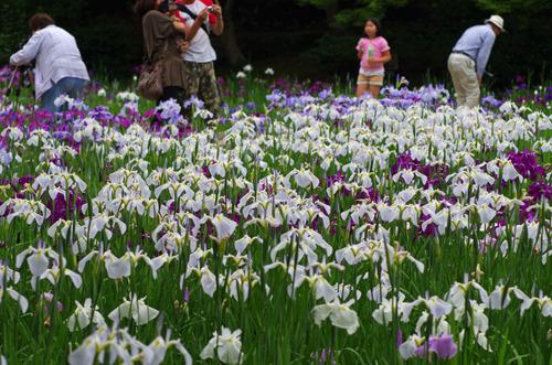 昭和記念公園201106-5