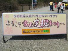 富士芝桜まつり-1
