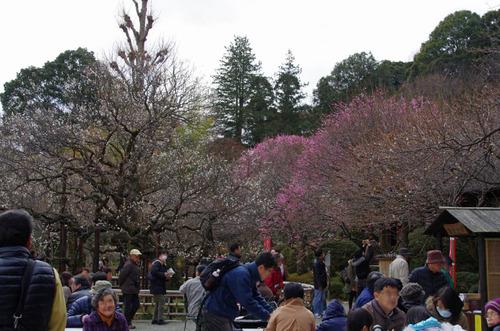 京王百草園201303-2