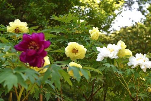 昭和記念公園201505-5