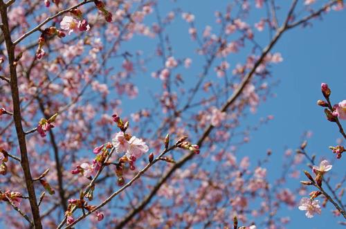 昭和記念公園201403-16