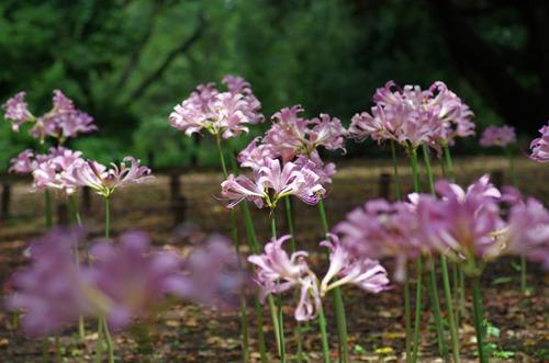 昭和記念公園201208-2