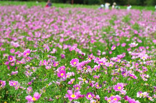 昭和記念公園201409-11