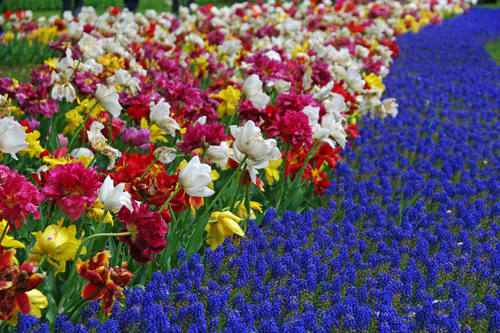 昭和記念公園チューリップ201004-3