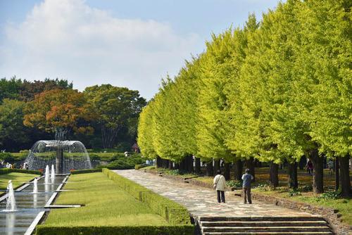 昭和記念公園201510-10