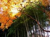 百草園晩秋-3