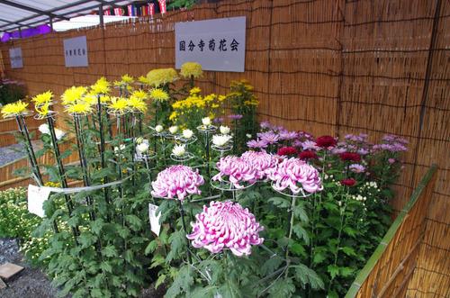 高幡不動201410-4