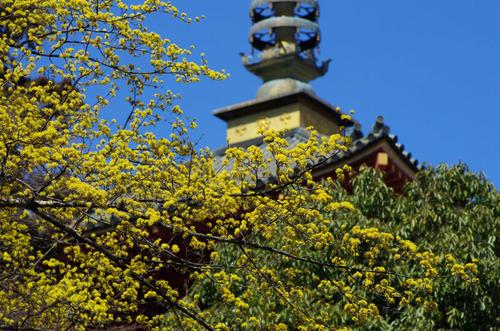 高幡不動尊201103-7