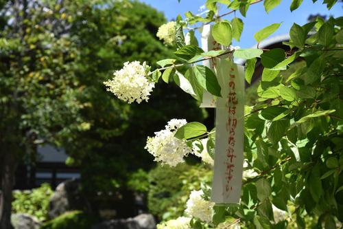 高幡不動尊201507-7