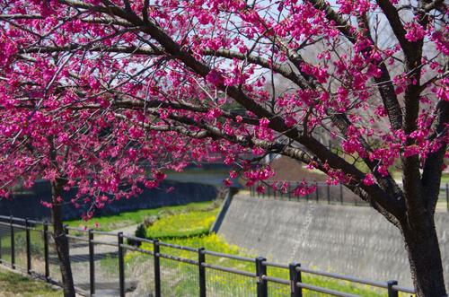 昭和記念公園201103-13