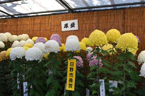 高幡不動尊201511-6