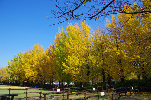 昭和記念公園201111-13