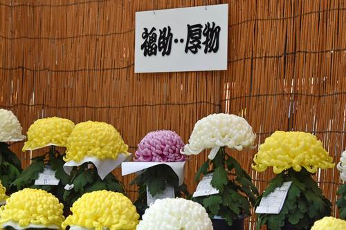 高幡不動尊201511-19
