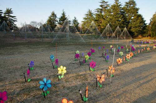 昭和記念公園201312−4