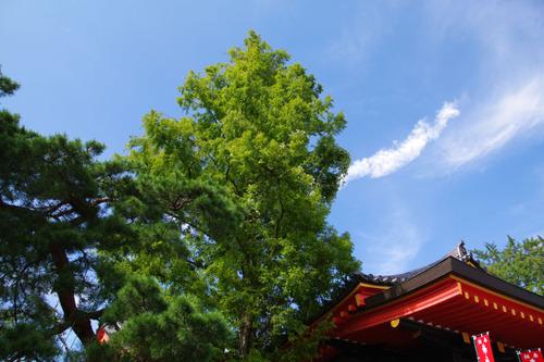高幡不動尊20101016-7