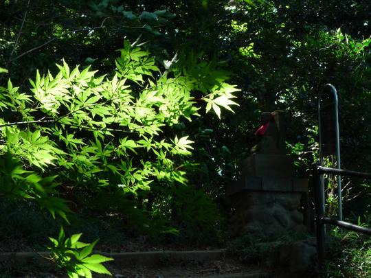 秋の空と光-5L