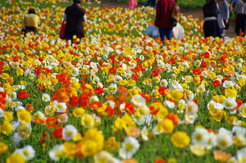 昭和記念公園201304-6