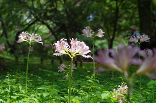 昭和記念公園201108-4