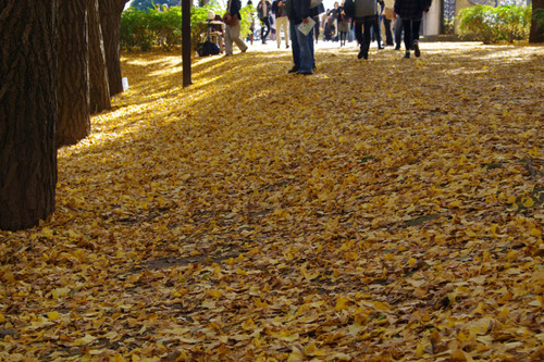 昭和記念公園201011-4