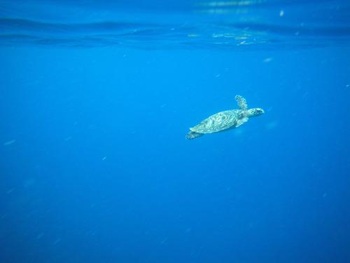西表島バラス島201008-3