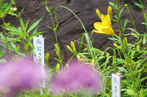 高幡不動201407-7