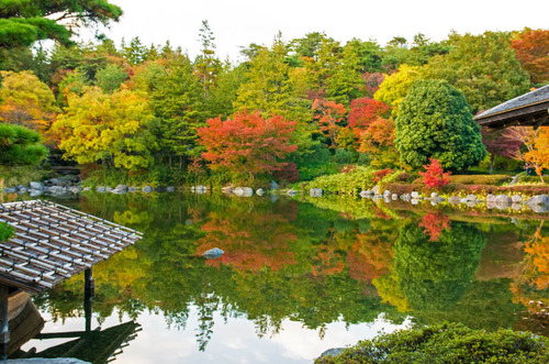 昭和記念公園201311-8