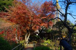 百草園の紅葉-S11