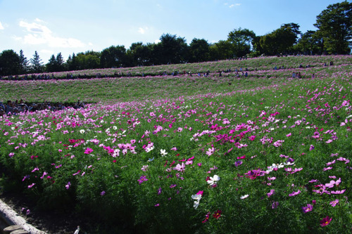 昭和記念公園201101-13