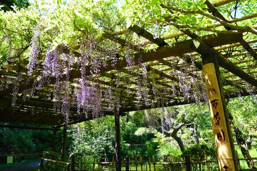 京王百草園201606-12