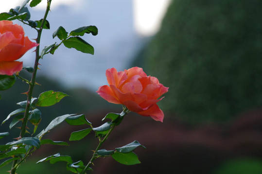 新宿御苑の秋2-10フェローシップ2