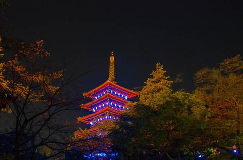 高幡不動尊ブルーライトアップ2012-7