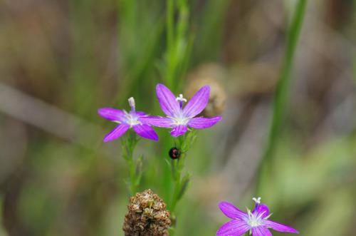 河川敷の花201106-7
