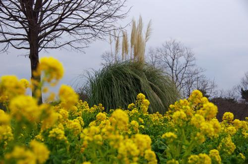 昭和記念公園201203-15