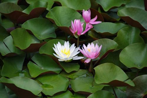 昭和記念公園水辺201006-6