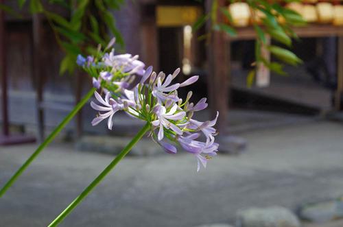 高幡不動尊201306-14