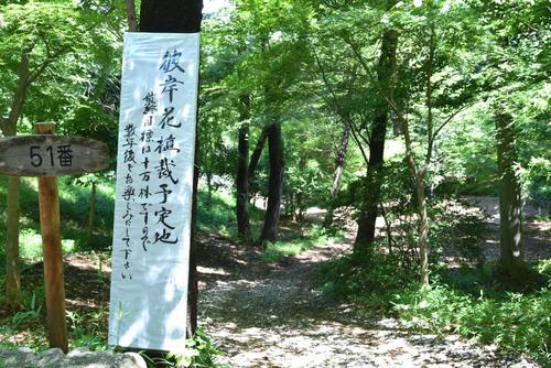 高幡不動尊201507-12