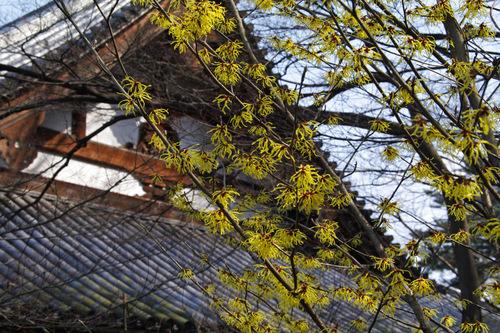 高幡不動尊春201003-2