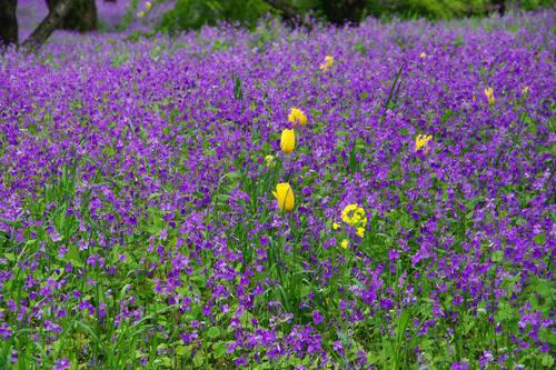 昭和記念公園の花201004-7