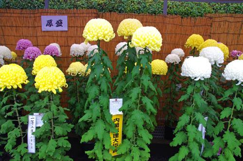 高幡不動201411-2
