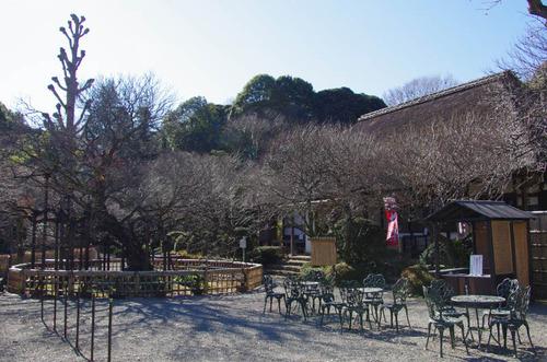京王百草園201201-5