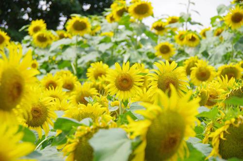昭和記念公園201208-10
