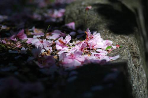 高幡不動尊20100424-7