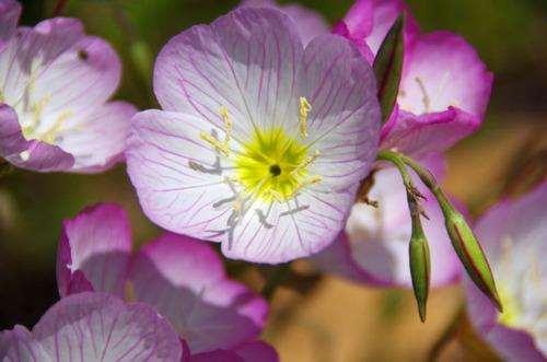 散歩道の花(5月)2012-5