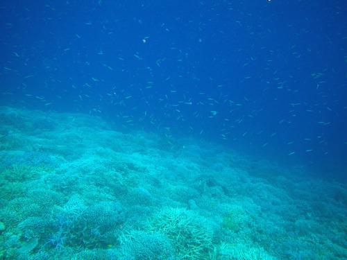 西表島バラス島201008-6