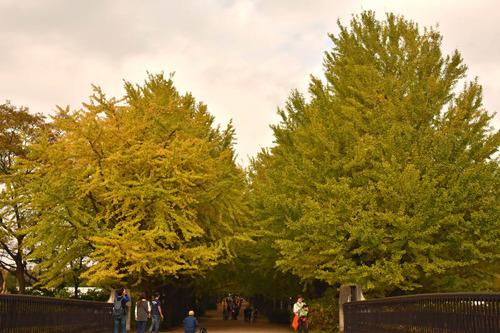 昭和記念公園201511-6