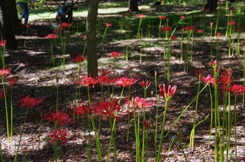 昭和記念公園201109-16