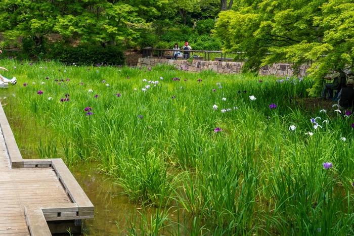 昭和記念公園201906