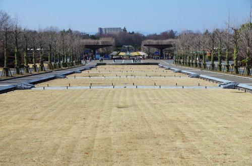 昭和記念公園201403-1